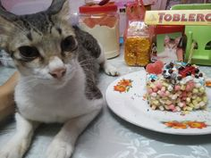 Happy Birthday Junior! #birthday #cat #October
