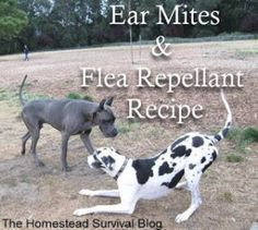 Ear Mites Recipe: Make a mild solution of tea tree oil and water, five drops of oil to 1 per cup of water. Gently drip about ten drops of the blended mixtu