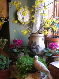 Landscaping With Rocks - How You Can Use Rocks Thoroughly Within Your Landscape Style Try Forcing Flowering Branches For Beautiful Indoor Winter Arrangements. Photograph By Kkmaraias Under The Creative Commns Attribution License To Enlarge Indoor Vegetable Gardening, Container Gardening, Pot Plante, Flower Branch, Flowering Shrubs, Winter Garden, Spring Flowers, Flowers Garden, Spring Plants