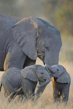 Elephant watching Safari in Amboseli, Taita Salt Lick and Tsavo East - http://www.sikunjema.com/index.php/affordable-luxury-safaris-in-kenya/low-price-safaris-starting-in-nairobi-and-mombasa/4-days-amboseli-taita-hills-salt-lick-and-tsavo-east-kenya-safari-from-nairobi-or-mombasa.html
