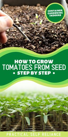 Growing tomatoes from seed is easy and I'll show you how to grow them in an indoor container garden. There's nothing like biting into a homegrown tomato that you nurtured from seed to fruit. While there may only be a few varieties of nursery starts available locally each spring, starting tomato seeds means you can grow any of the hundreds of unique tomato varieties. Growing Tomatoes From Seed, Growing Tomatoes In Containers, Growing Veggies, Growing Plants, Grow Tomatoes, Vegetable Garden Tips, Starting A Vegetable Garden, Container Gardening Vegetables, Tomato Seedlings