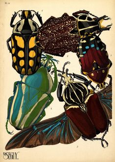 prints of insects art deco, E. A. Seguy, Insectes, North Carolina State University collection.