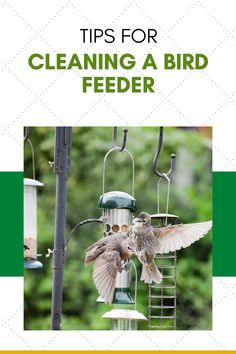 If you plan to place bird feeders in your back yard, then you have a responsibility to the wild birds to keep it clean. Keeping the bird house clean will help limit the transmission of disease and it will also keep your birds happy and coming back for more! If you are a new birder, then cleaning your new bird feeding station might seem like an overwhelming task. Check out our 5 simple tips for cleaning a bird feeder.