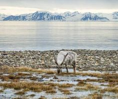 Spitsbergen Norway - Top 10 Islands To Visit By Cruise Ship   #travel #holiday