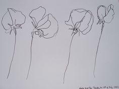 drawings of sweet peas - Google Search