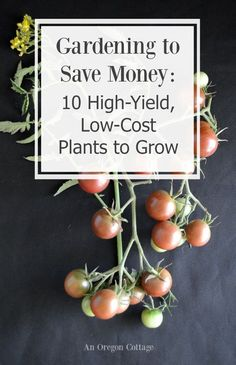 "Gardening to Save Money:10 high-yield, low-cost plants to grow to help you answer the question, ""does gardening really save money?"""