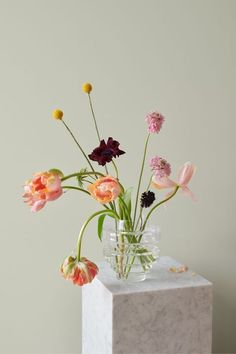 LADY Pure Color 8281 Pale Linden – et perfekt valg blant våren og sommerens farger! Flower Power, Magazine Deco, Flower Aesthetic, Ikebana, Flower Vases, Tulips In Vase, Home Interior, Spring Flowers, Planting Flowers
