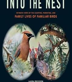 Into The Nest: Intimate Views Of The Courting Parenting And Family Lives Of Familiar Birds PDF