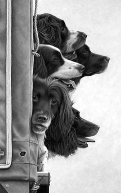 The soul of a dog — deepsoulfury:   Black and White Photography-Dogs