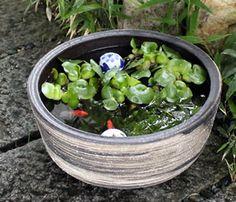 信楽焼き 睡蓮鉢 メダカ鉢 金魚鉢 陶器すいれん鉢 スイレン 水鉢 めだか鉢