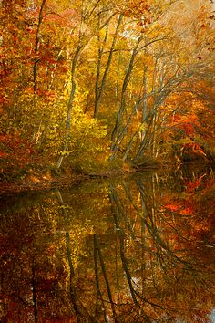 Potomac river in Fall| Whysall Photography