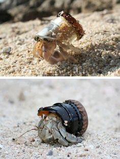 """chocolate-chip-muffinz: themeatandsarcasmgirl: earth-song: That is the nature """"adapting"""" to human destruction. He's an ocean hobo. I feel like this is equally cute and sad and my heart just can't take it."""