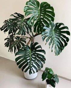 Fake Plants, Potted Plants, Indoor Plants, House Plants Decor, Plant Decor, Diy Plante, Popular House Plants, Chinese Money Plant, Balkon Design