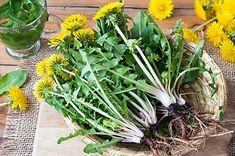 5 Plantes à cueillir autour de chez vous avec des propriétés insoupçonnées Andy Goldworthy, Garden Globes, Concrete Garden, Agriculture, Pergola, Plants, Diy, Insert, 300 Calories