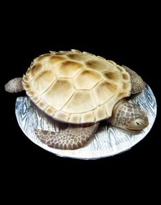 Loggerhead Sea Turtle Birthday Cake→Mike's Amazing Cakes.