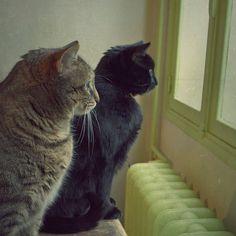 still cats