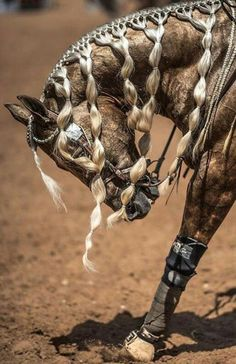 Cutting western quarter paint horse appaloosa equine tack cowboy cowgirl rodeo r… – Art Of Equitation Horse Mane Braids, Horse Hair Braiding, Braid Hair, Pretty Horses, Beautiful Horses, Animals Beautiful, Beautiful Braids, Horse Costumes, Horse Care