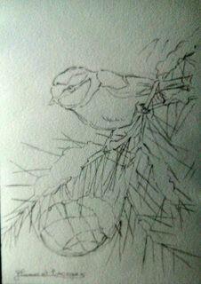 Chaton fait au crayon pastel blanc sur feuille de canson noire ...