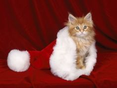 Santa Paws HD Wallpapers. Download Animals & Birds Desktop Backgrounds,Photos in HD Widescreen High Quality Resolutions for Free.