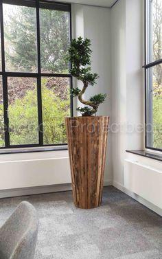 Houten handgemaakt bak met Ficus microcarpa in de vergaderzaal bij Bouwbedrijf Wessels Zeist.
