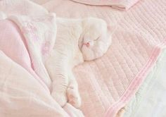 Imagem de cat, pink, and cute