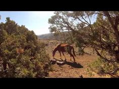 Mustang horse reno nevada gopro hero mountain trail rocky wild pony desert canyon - YouTube