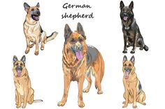 Dog German shepherd SET by kavalenkava on @creativework247