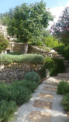 Finca at the sun leaning of the small town Soller. In a still origin, agrarian environment between orange trees and olive groves offers Ca Na Franca holiday...