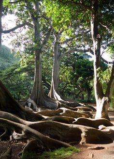 66 Best Botanical Gardens in Hawaii - Dailly Pins Kauai Vacation, Hawaii Travel, Italy Vacation, Kauai Hawaii, Oahu, Kahlil Gibran, Big Island, Island Life, Places To Travel