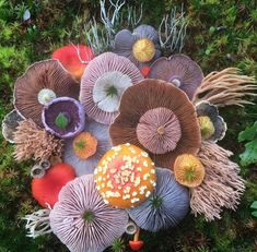 Hello! This blog was started as a place to put all the interesting photos/info/whatever of fungi I...
