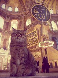 Кошки являются единственными животными, которым доступен вход в мечеть.