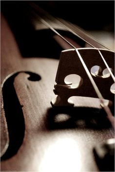 Violin close up | Lucia Rustichelli