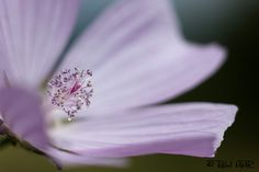 Detalle Lila   Flickr: Intercambio de fotos