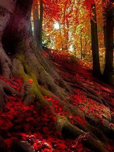 Let Us Enjoy The Nature -  Crimson Forest, Bavarian Alps, Germany