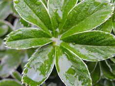 Plant Leaves, Menu, Health, Plants, Magick, Menu Board Design, Health Care, Plant, Planets