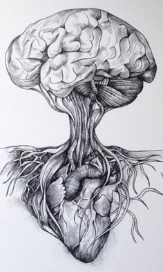 Brain connected to Heart