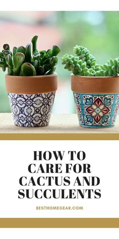 So you're considering growing your own cactus plants or succulents! You've seen the pictures on Pint Cacti And Succulents, Cactus Plants, Indoor Cactus, Indoor Garden, Cool Diy Projects, Outdoor Projects, Garden Projects, Cactus Care, Wood Pergola