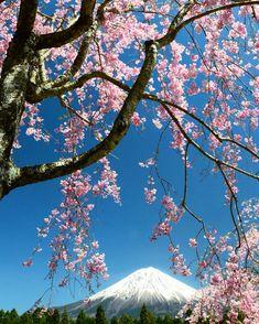 Sakura, Mt.Fuji Japan