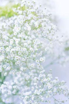 White Clouds by Yuliya Ivanova / White Flowers, Beautiful Flowers, Beautiful Pictures, White Flower Background, Flower Aesthetic, Blue Aesthetic, Flower Backgrounds, Flower Wallpaper, Deco Nature