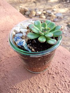 Succulent terrarium in mason jar