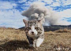 赤レンガ倉庫に猫ばかり800点 カワイイを超える写真群 最大規模の猫写真展
