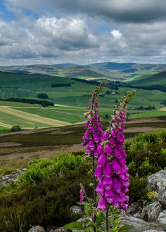 ڿڰۣ✿ View from White Caterthun, an Iron Age fort in Angus, Scotland.