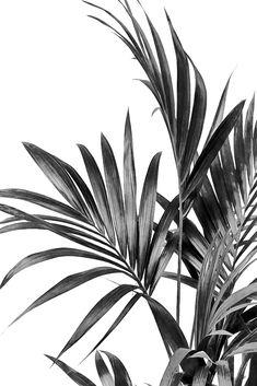 Palm Leaves Black and White 01 Art Print by - X-Small Black And White Picture Wall, Black And White Posters, Black And White Wall Art, Black And White Pictures, Black And White Wallpaper Phone, Black And White Words, Black And White Leaves, Black And White Design, Black White