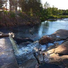 Den bästa!  #speciaali #luontokuva #pyhäjoki #valokuvaus #potd
