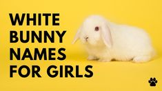 White Bunny Names For Girls