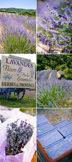 Provence - I love lavender! So want to see Provence! French Lavender, Lavender Blue, Lavender Fields, Lavender Flowers, Lavender Cottage, Lavender Wreath, Lavender Garden, Lavender Soap, Lavenders Blue Dilly Dilly