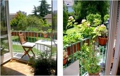 The Greenest Thumb! Contest: Janine's Mini-Balcony-Garden
