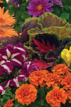 Get big, beautiful blooms all season long with Potted Premium Annuals. Easy to grow, these plants will transform your garden into a gorgeous display.