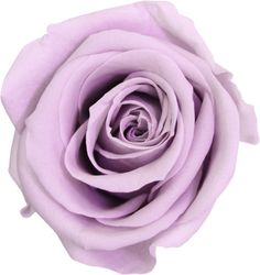 Producción de Flores Preservadas,por Liofilización