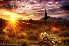 A beautiful morning in the Sonoran Desert after a night of rain. Beautiful World, Beautiful Images, Beautiful Sunset, Firefly Painting, Landscape Photography, Nature Photography, Better Photography, Popular Photography, Country Landscaping